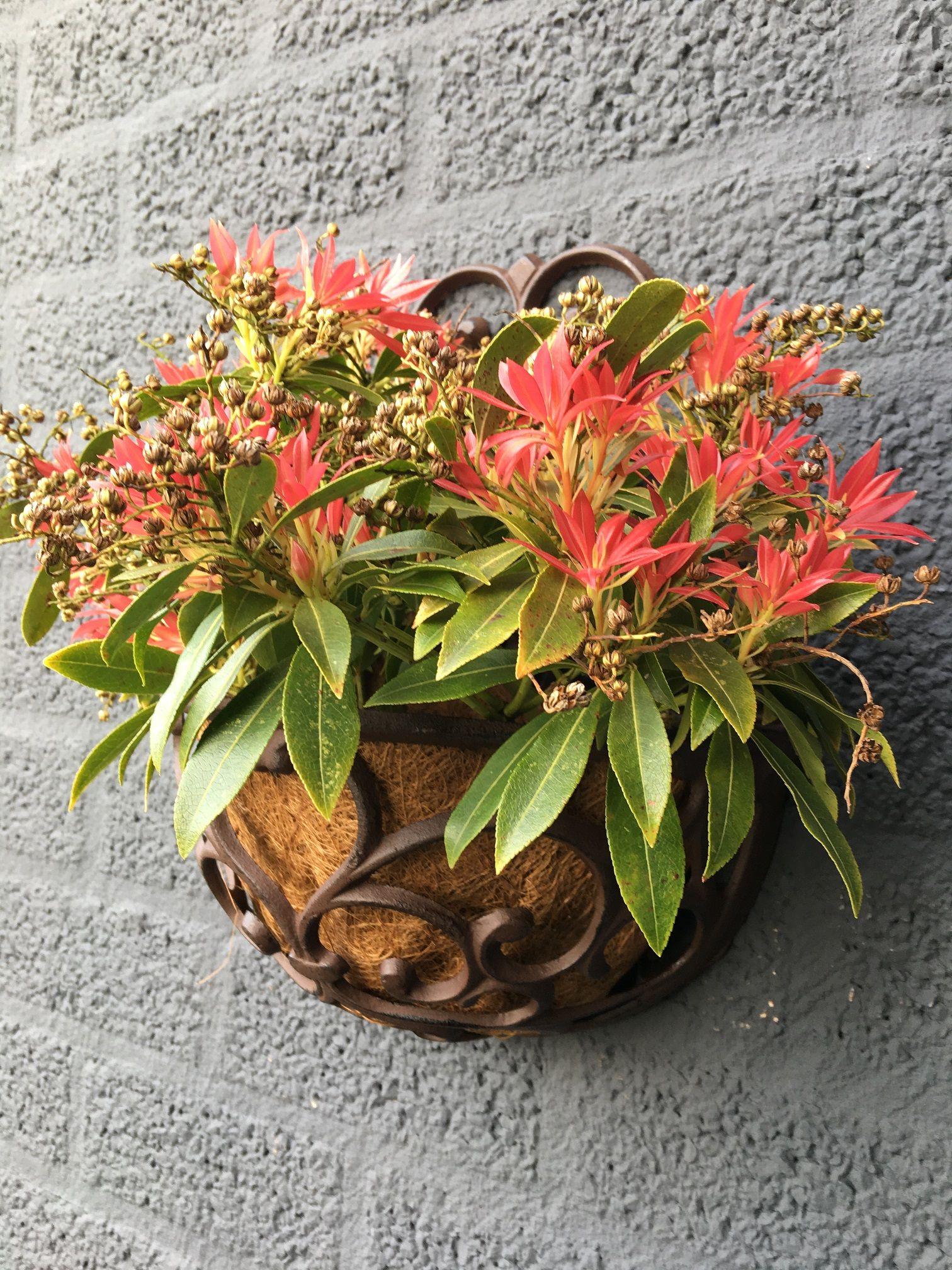 Bloembakken Voor Balkon.Tags Planter Planten Bloemen Bloembak Bloembakken Antieke